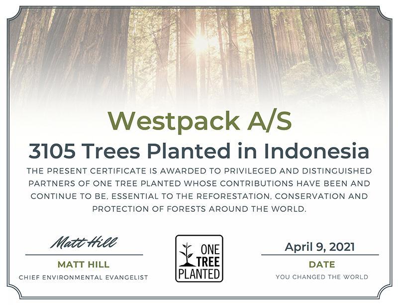 Vi har lige doneret 3.105 træer til en nationalpark i Indonesien - takket være vores kunder